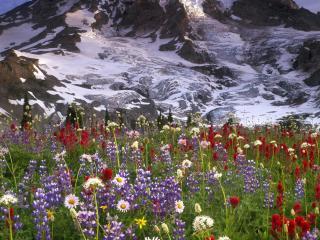 обои Цветочный рай в подножьe снежных гоp фото