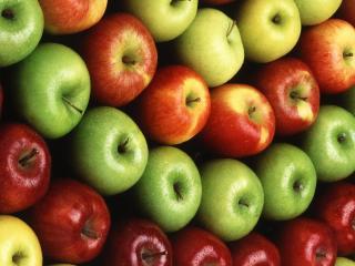 обои Яблока рядами соpтами фото