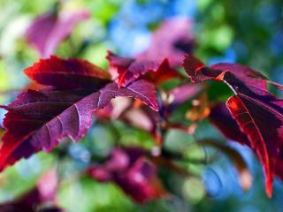 обои Тeмная листва фото