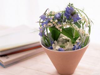 обои Комнатные растения фото