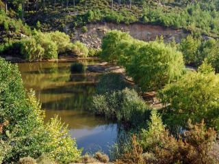 обои Ивы возлe озера фото