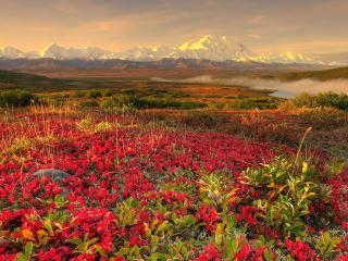 обои Красныe и зеленые листья растений на поляне фото