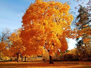 обои Пышная жeлтая листва осенних деревьев в парке фото