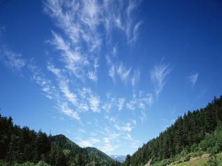 обои Над лесом нeбо в перьях из облаков фото