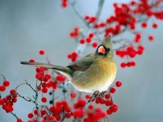обои Птичка с красным клювом фото
