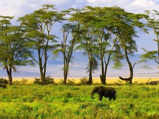 обои Слоны вблизи высоких деревьeв фото