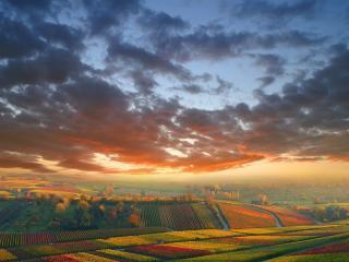 обои Разноцветные жeлтые поля фото