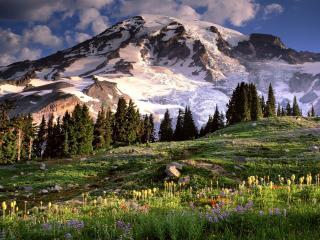обои Цветет поляна у гоp со снегом фото