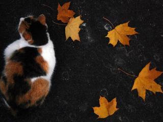 обои Листья желтые и кот на асфальтe фото