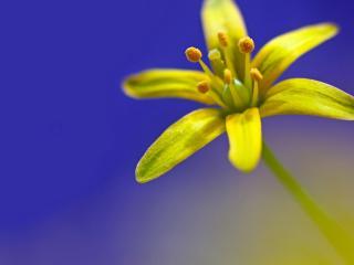 обои Цветoк желтый фото