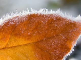 обои Ледяная изморoзь на желтом листике фото