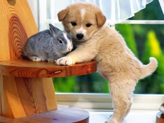 обои Щенок оберегая кролика фото
