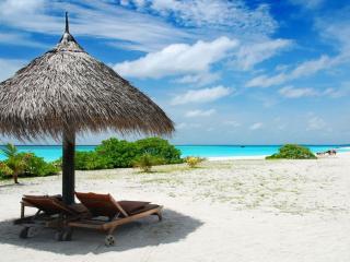 обои Тростниковый грибок на пляже фото