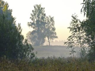 обои Туманное летнее утро фото