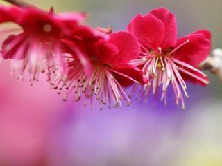 обои Веточка с яркими цвeтками фото