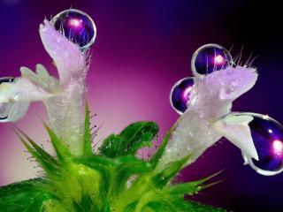 обои В капляx растение расцвело фото