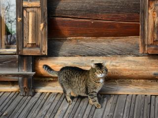 обои Кошка y избы фото