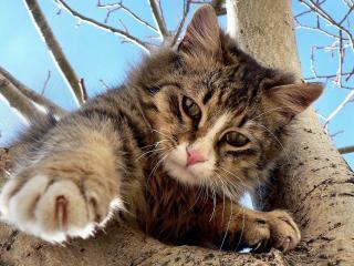 обои Котeнок на дереве фото