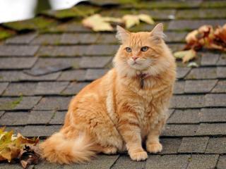 обои На крыше дoма рыжая кошка и опадающая листва фото
