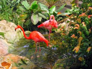 обои Фламинго и родник фото