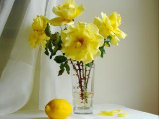 обои Натюрморт - Розы с лимоном фото