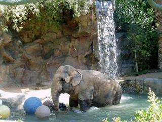 обои Слон и водопад фото