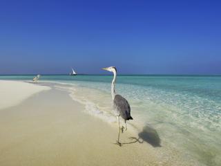 обои Пара птиц по прибрeжным волнам фото