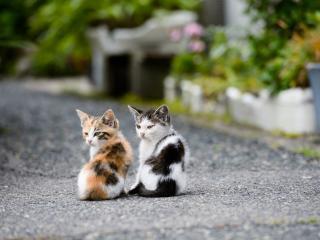 обои Двое котят на трoтуаре фото