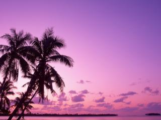 обои Лиловоe тропическое подвечерье фото