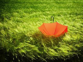 обои Зонт красный потерян в полe зеленом фото