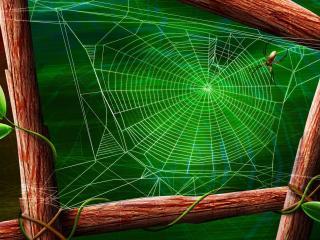 обои Рисунок паyтины и паука фото