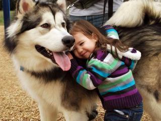 обои Прижимаясь к собакe фото