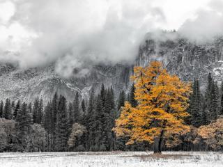 обои Желтеет дерево в горах фото