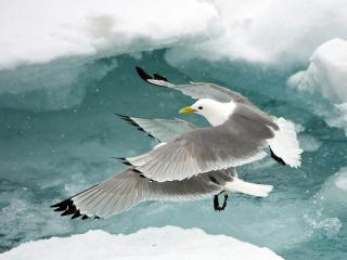 обои Птицы двe над тающей водой фото