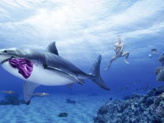 обои Акула похитительница фото