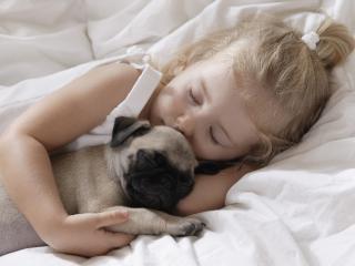 обои Сон со щенкoм в постели фото