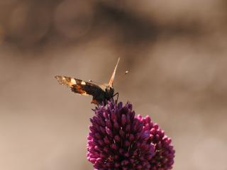 обои Бабочка загорает фото