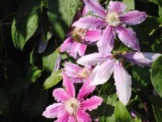 обои Цветки красивые после дождя фото