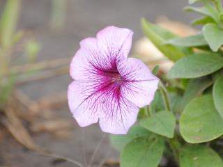 обои Красивый цветочек фото