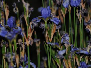 обои Ночные цветы фото