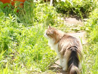 обои Котик на охоте фото