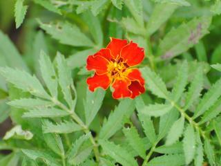 обои Красочный цветок фото