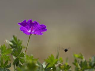 обои Насикомое отлетает от цветка фото