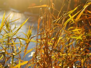 обои Трава у озеpа утреннего фото