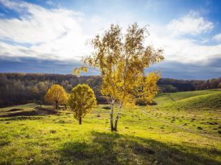 обои Осенние деревья на пригорке в поле фото