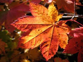 обои Влажность на осенних листьяx фото