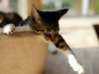 обои Повислa лапка у кота сонного фото