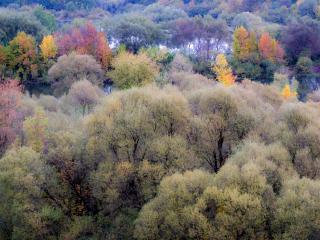 обои Осенняя акварель леса Десны фото