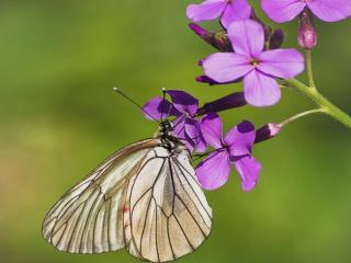 обои Бабочка-красавица,   скушайте варенье. фото