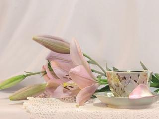 обои Натюрморт - В розовом цвете фото